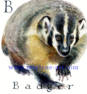 B - the second letter in the Animal Alphabet - is for Badger