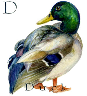 D - the fourth letter in the Animal Alphabet - is for Dcuk