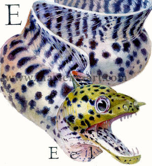 E - the fifth letter in the Animal Alphabet - is for Eel