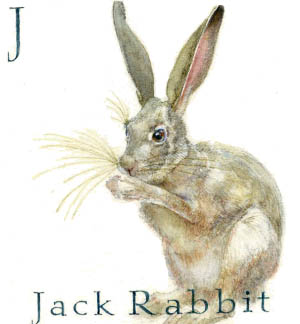 J - the tenth letter in the Animal Alphabet-is for Jack Rabbit