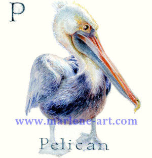 P - the 16th letter in the Animal Alphabet-is for Pelican