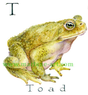 T - the 20th letter in the Animal Alphabet-is for Toad