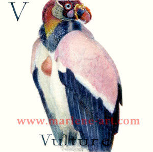 V - the 22nd  letter in the Animal Alphabet-is for Vulture