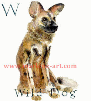 W - the 23rd  letter in the Animal Alphabet-is for Wild Dog
