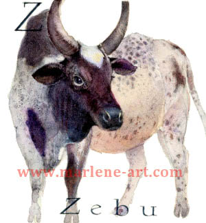 Z - the 26th  letter in the Animal Alphabet-is for Zebu